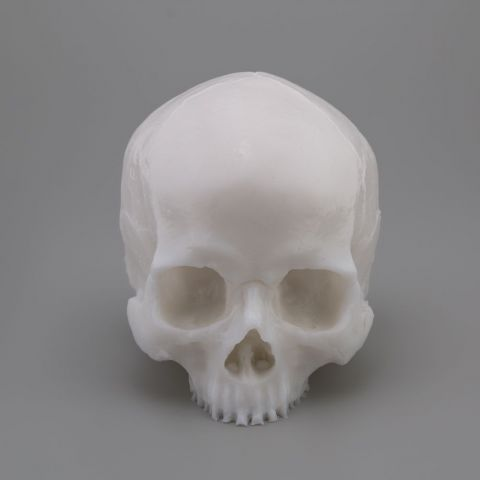 A Pound of Flesh Tattooable Skull